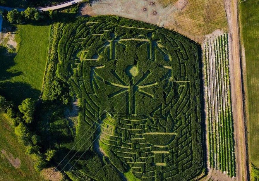 An aerial photo of a corn maze with the Special Olympics globe logo and a torch